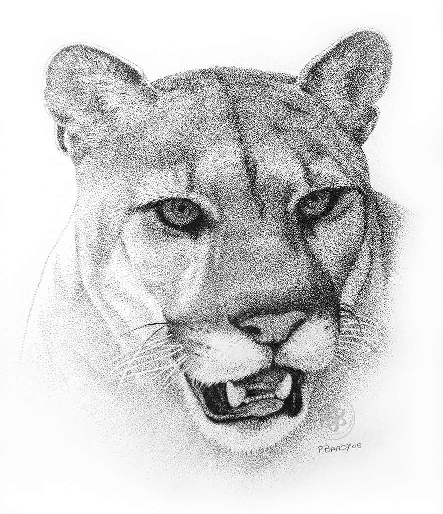 Cougar Face Line Drawing : Sevgili nokta